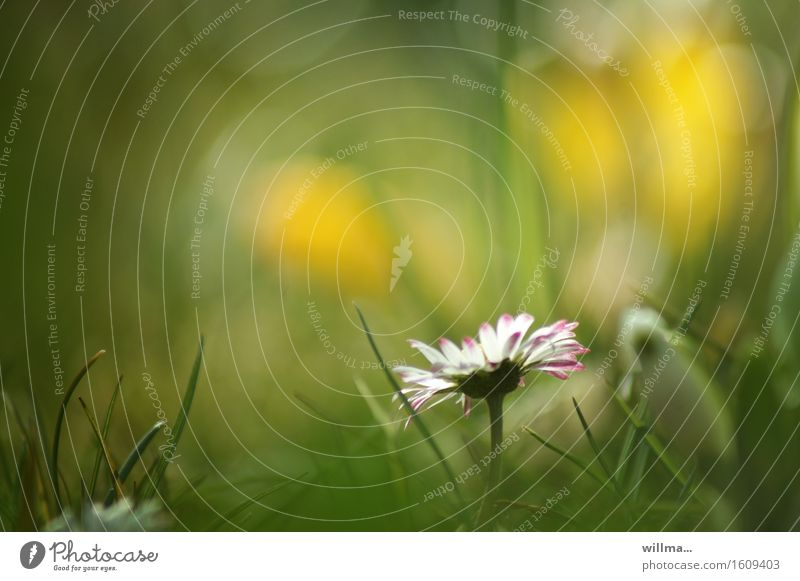 _\|/ Daisy Meadow Flower meadow Meadow flower Grass Blossoming Natural Yellow Green White Nature Plant Beautiful Modest Delicate Illuminate Spring Summer