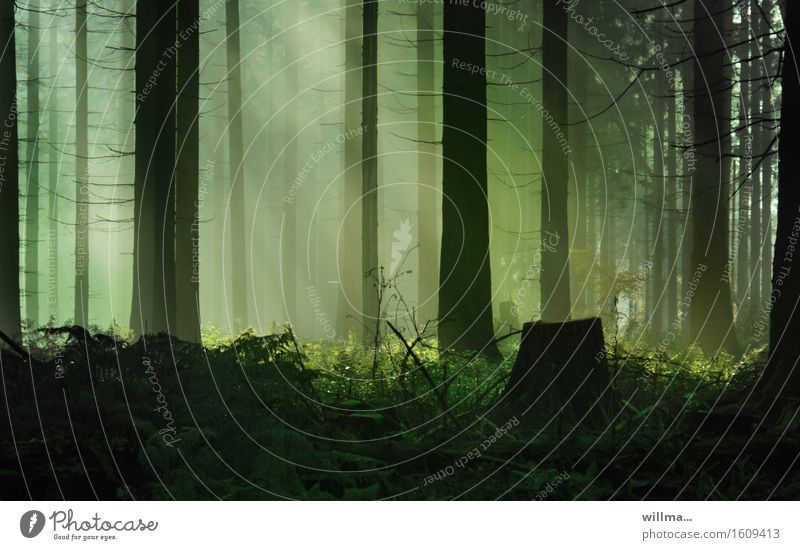 ||\ || | Forest Coniferous forest Sunbeam Light (Natural Phenomenon) Tree stump Green Black Nature Experiencing nature Beautiful weather Environment Plant