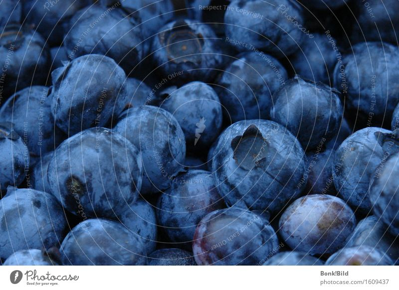blueberry country Fruit Breakfast Organic produce Vegetarian diet Slow food Blueberry Joy Healthy Eating Fitness Wellness Life Meditation Select Shopping