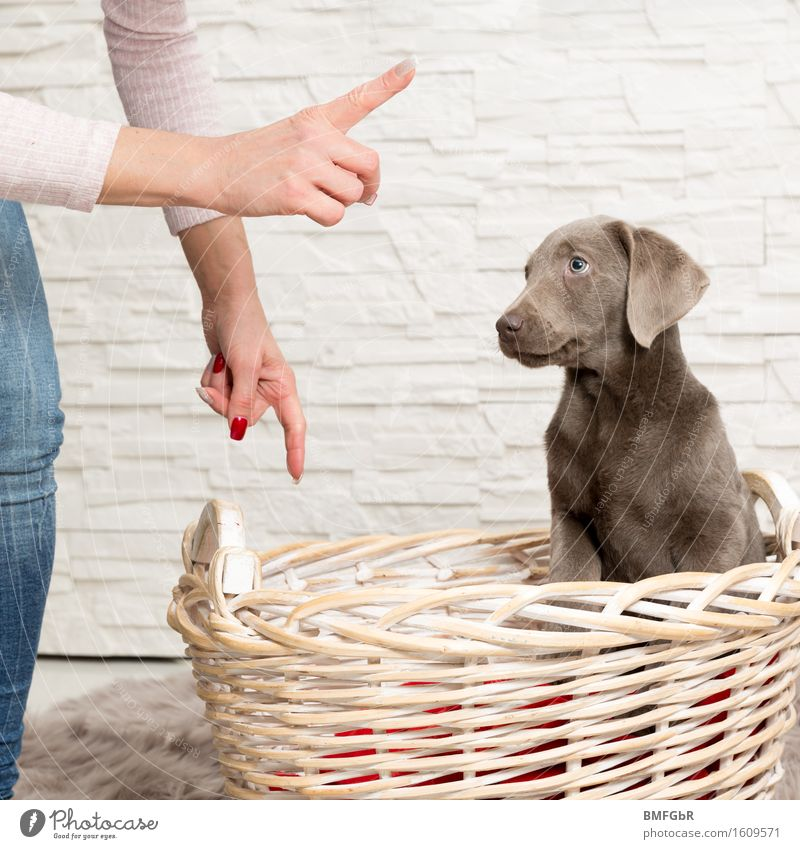 Now pay attention Feminine Woman Adults Hand 1 Human being 30 - 45 years Animal Pet Dog Labrador Puppy Baby animal Crouch Listening Sit Love of animals