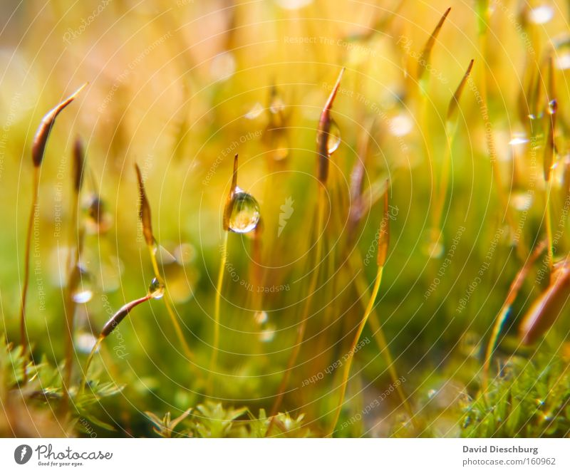 Nature Plant Green Summer Colour Water Yellow Spring Grass Rain Drops of water Wet Ground Blade of grass Moss