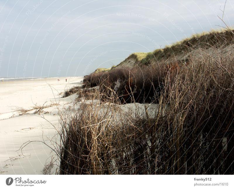 dune Beach Beach dune Water Island Plant North Sea