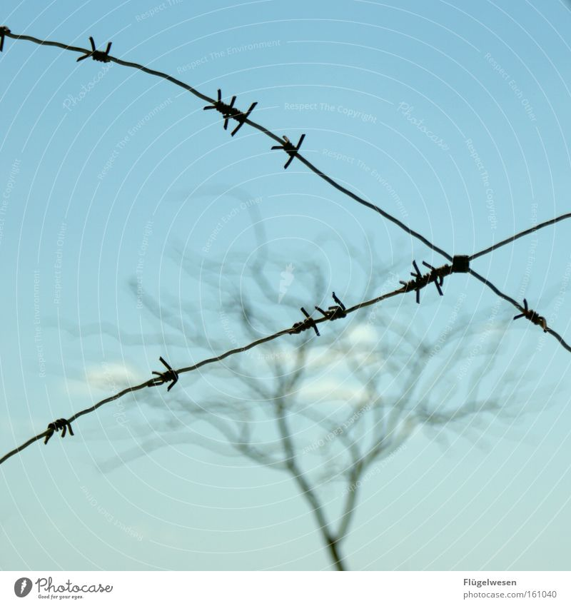 Tree Freedom Wall (barrier) Derelict Fence Border War Curtain Captured Grating Bleak Penitentiary Justice Cuba Zone Outbreak
