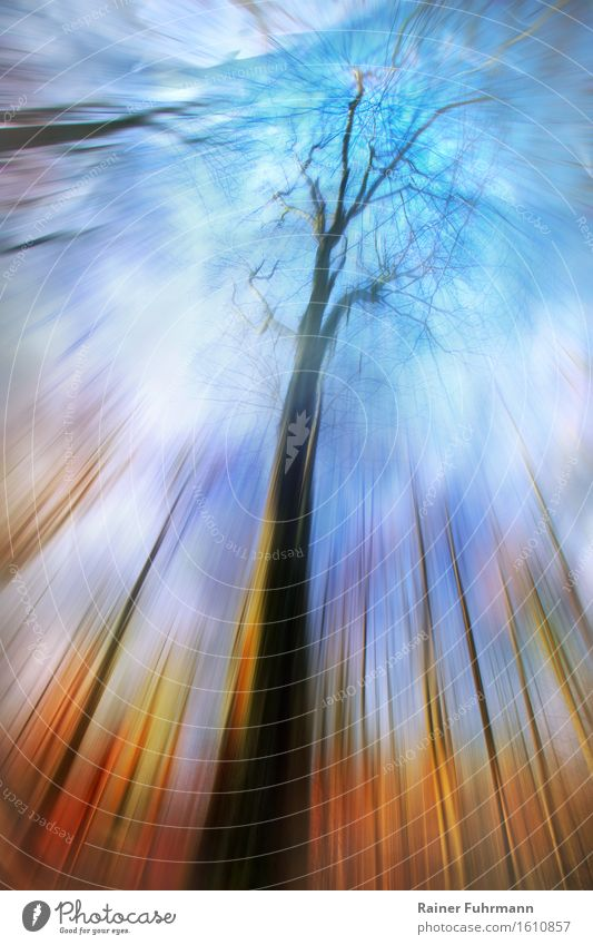 Dreamtime - a view through trees into the sky Nature Landscape Forest Looking Hiking Authentic Exceptional Fantastic Blue Gold Colour photo Exterior shot