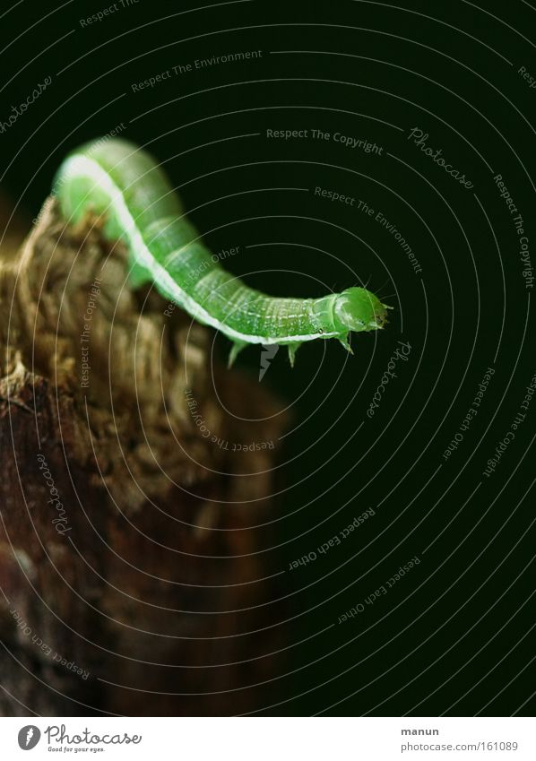 Caterpillar II Background picture Nature Environmental protection Voracious Pests Destructive weed Butterfly Metamorphosis Development Spring Power Force