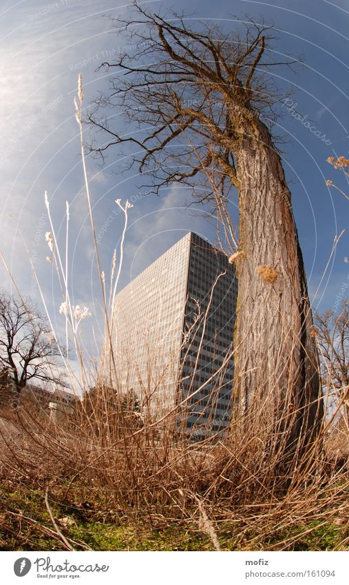 economic crisis High-rise Tree Munich Parking lot Fisheye Industry Siemens sendling upper sendling