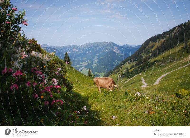 Between mountain and valley Happy Vacation & Travel Tourism Trip Summer Sun Agriculture Forestry Environment Landscape Plant Sunlight Beautiful weather Flower