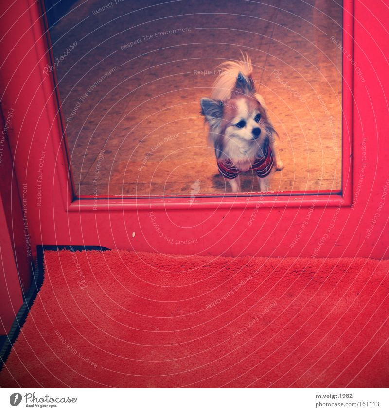 Red Loneliness Style Dog Wait Glass Door Clothing Entrance Watchfulness Mammal Hip & trendy Hipster