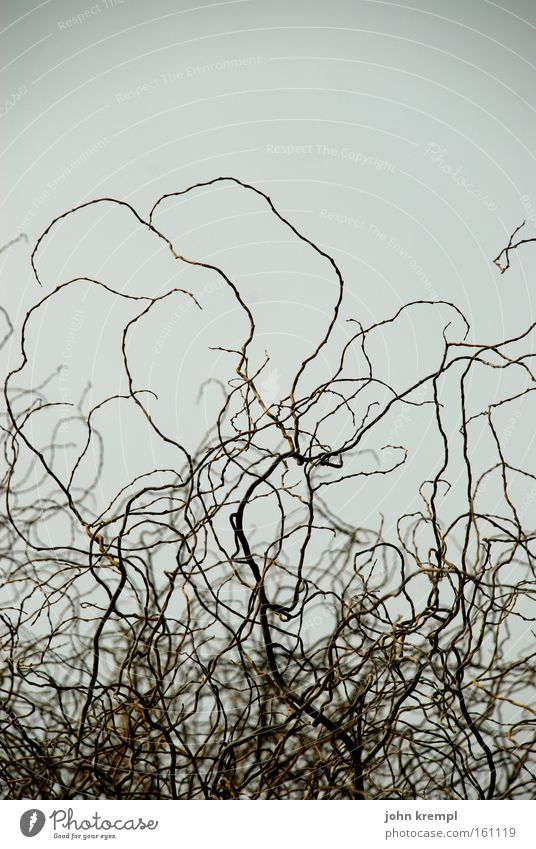 Bushes Chaos Muddled Twig Bushy Leafless Bright background