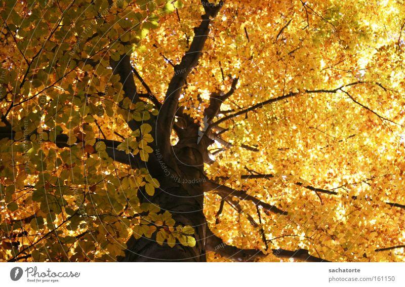 Tree Leaf Yellow Autumn Moody Orange Branch Seasons Innsbruck Hofgarten