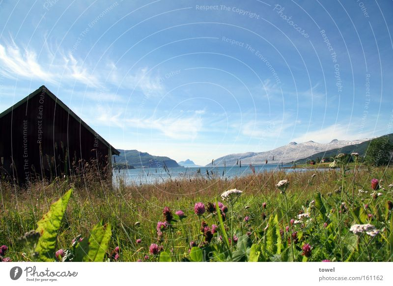 norwegian summer Sky Blue Hut Wood Norway Fjord Meadow Green Flower Mountain Glacier Ocean Freedom Relaxation Extensive Exterior shot Landscape Summer