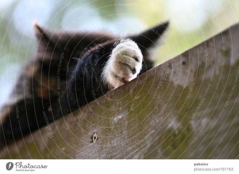 Hand Animal Wood Cat Sleep Pelt Boredom Mammal Paw Pet Gloves Claw Domestic cat