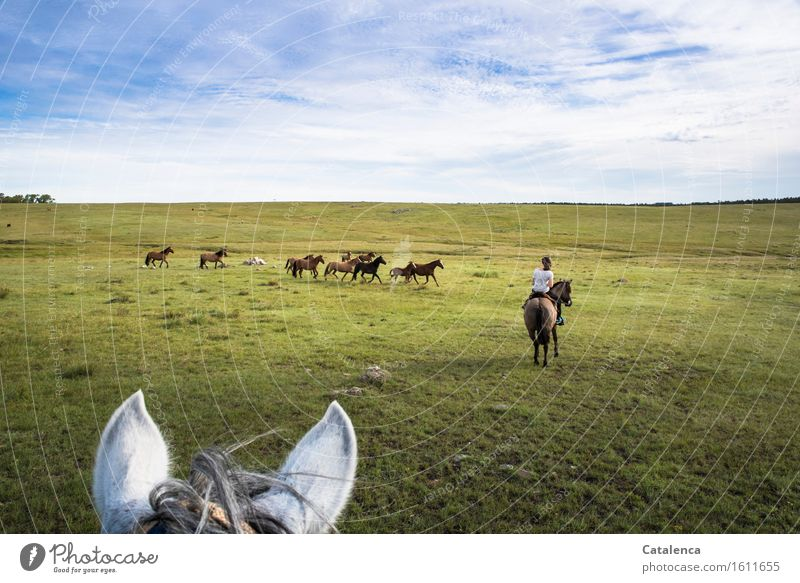 horse hauling Ride Trip Human being Feminine Young woman Youth (Young adults) 1 Landscape Plant Animal Horizon Beautiful weather Grass Meadow Field Horse Herd