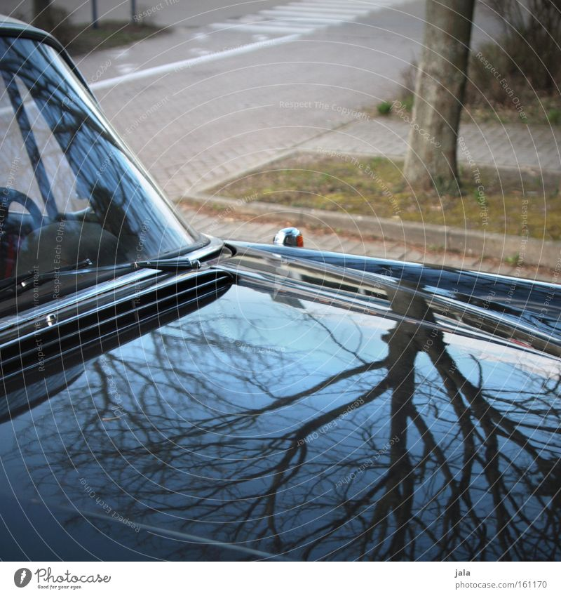 Sky Tree Blue Black Street Car Glittering Transport Motor vehicle Traffic infrastructure Parking lot Vehicle Mirror image Varnish