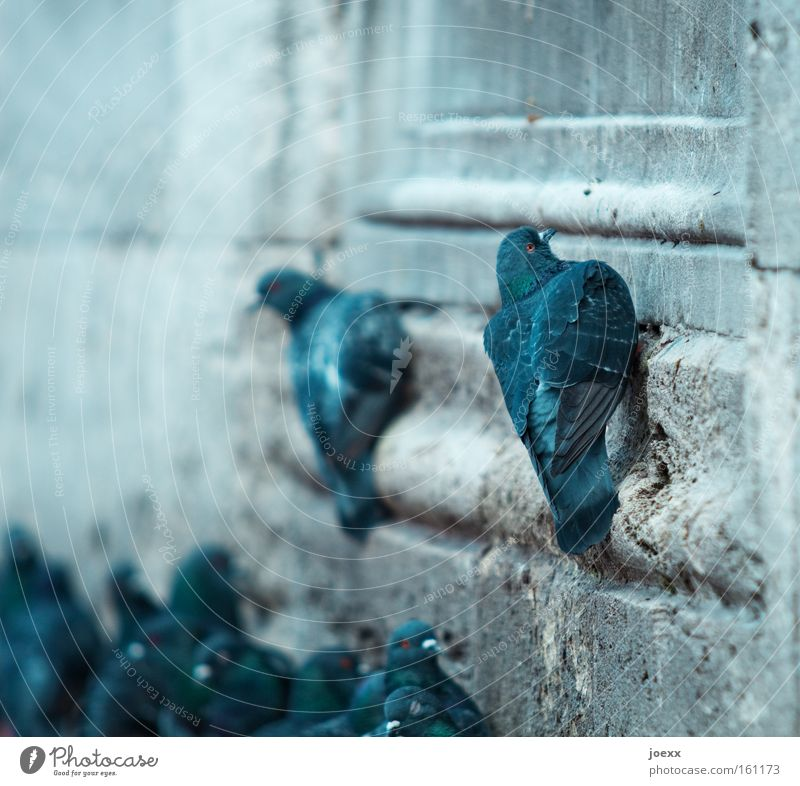 Wall (building) Wall (barrier) Bird Dirty Might Feces Narrow Career Pigeon Go up Resume Envy Jealousy Pigeon droppings