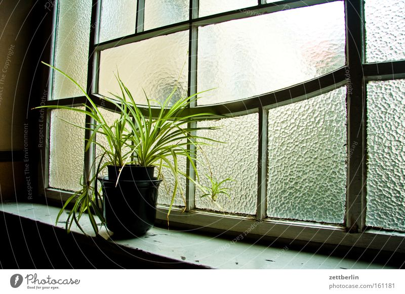 House (Residential Structure) Window Glass Stairs Hallway Climate change Town house (City: Block of flats) Flowerpot Foliage plant Pot plant Ribbed glass
