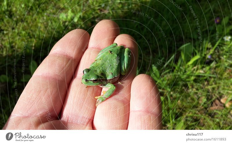 Hello tree frog Nature Spring Garden Animal Wild animal Frog 1 Sit Positive Beautiful Green Tree frog Colour photo Exterior shot Close-up Day Sunlight
