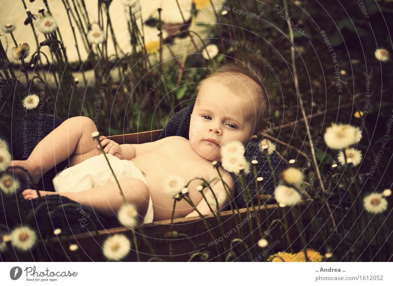 Dreaming in the green Feminine Child Baby Toddler Girl Infancy 1 Human being 0 - 12 months Observe Blossoming Lie Sadness Faded Friendliness Happiness Happy