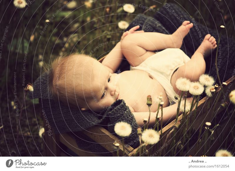 Dreaming in the green 2 Feminine Child Baby Toddler Girl Infancy 1 Human being 0 - 12 months Observe Blossoming Lie Sadness Faded Friendliness Happiness Happy