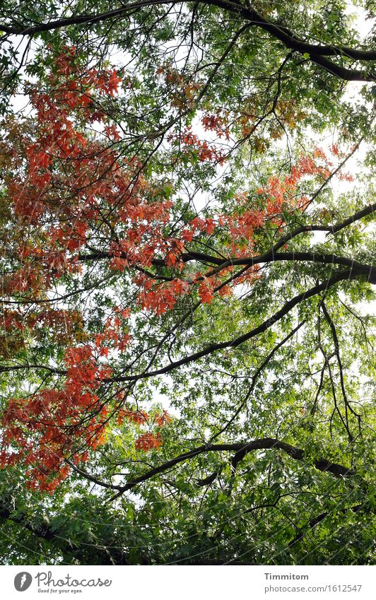 Plant Green Tree Red Leaf Black Environment Natural Park Contentment Esthetic Serene