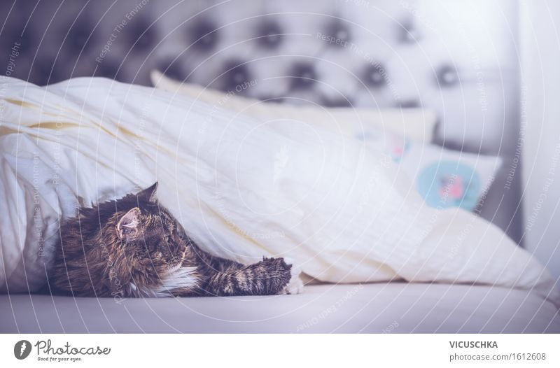 Cat in bed under the blanket Lifestyle Relaxation Living or residing Flat (apartment) Bedroom Animal Pet 1 Joy home Duvet Colour photo Interior shot