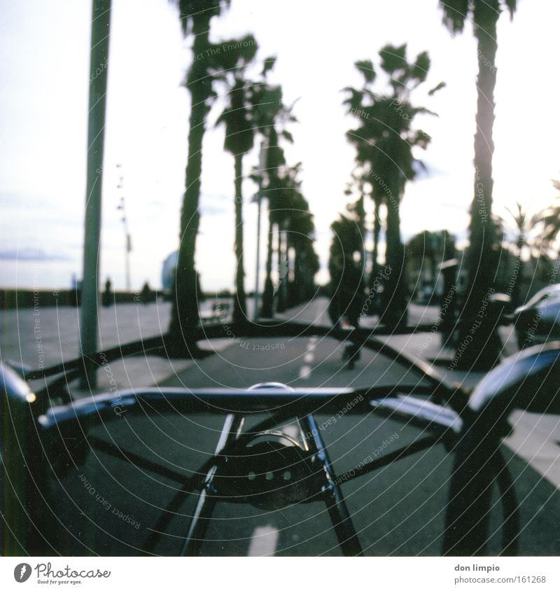Movement Bicycle Open Driving Clean Analog Idea Palm tree Rent Barcelona Alternative Medium format Bicycle handlebars Financial Industry Eco-friendly
