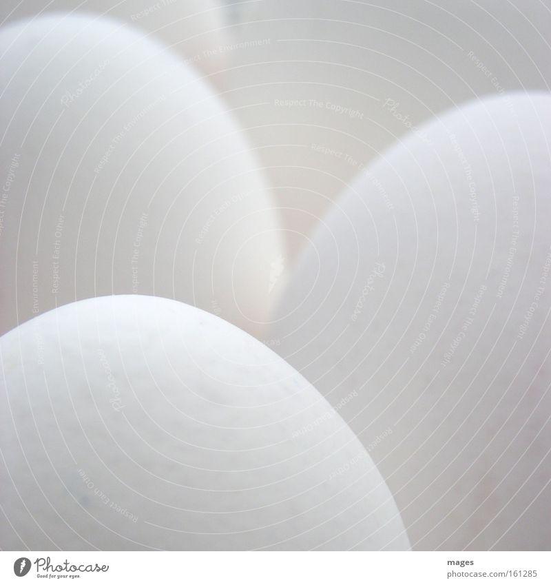 eggs Gastronomy Fresh Bright White Quality Egg Hen's egg Eggshell Gray scale value Diffuse Monochrome Icebox Easter egg incubator Colour photo Subdued colour