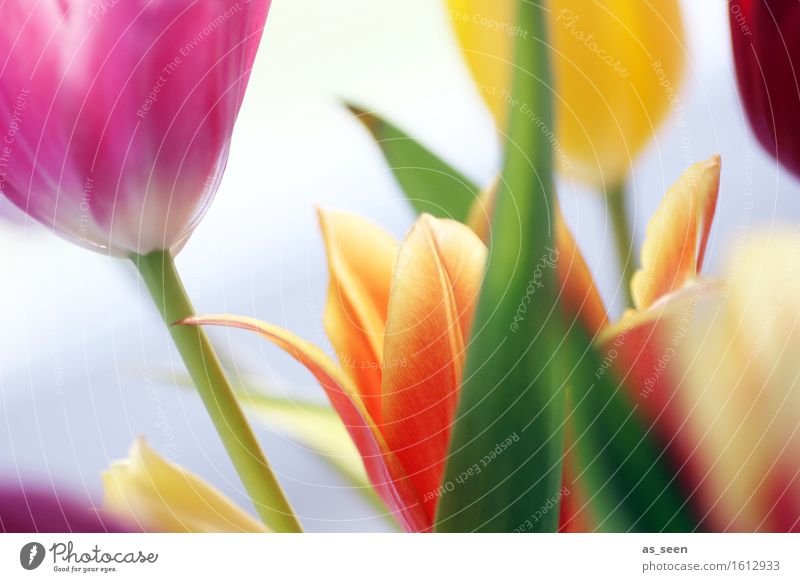 Nature Plant Green Colour Flower Joy Environment Yellow Life Spring Movement Lifestyle Pink Orange Growth Happiness