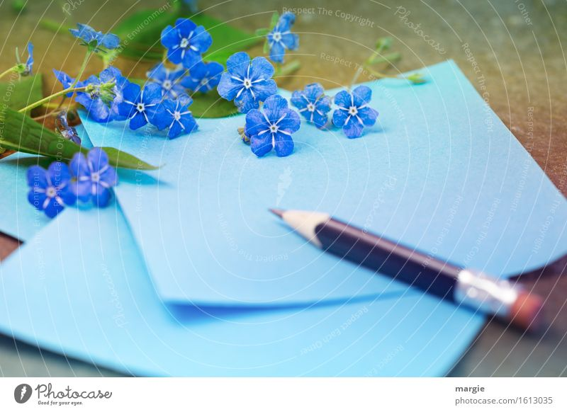 Forget-me-not - flowers with blue paper and pencil Profession Office work Workplace Advertising Industry To talk Flower Blossom Foliage plant Write Blue