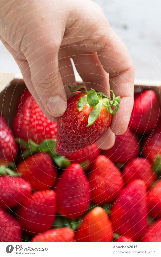 Strawberry Love III Hand To hold on Red Summer Spring Healthy Eating Dish Green Berries Fingers Delicious Juicy Lust