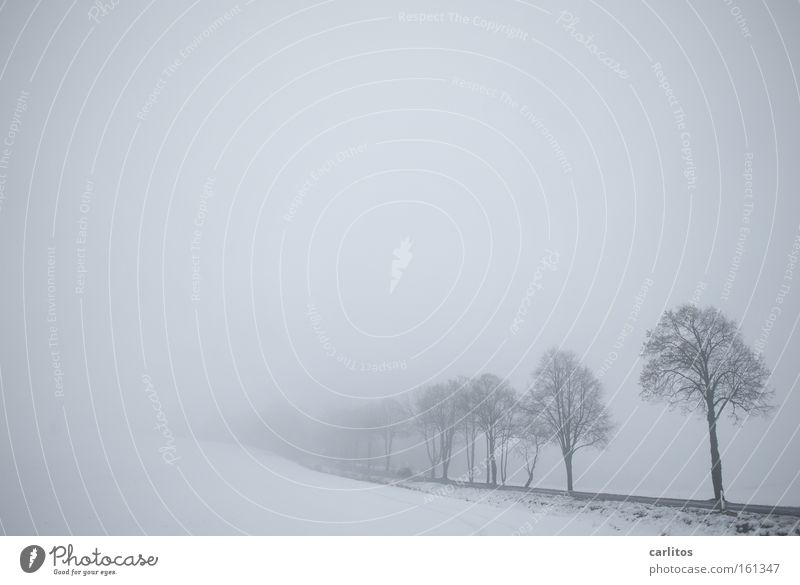 I have one more thing. Winter Fog Frost Calm Grief To be silent Tree White Diffuse Blur Motionless Distress Think Snow Sadness