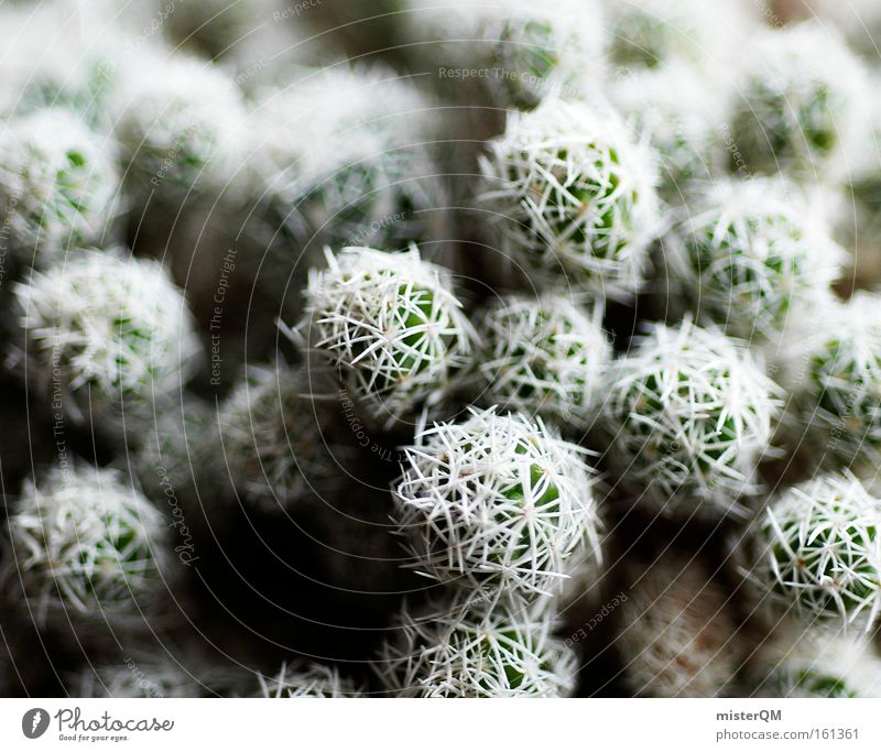 Ouch! Cactus Thorn Point Houseplant Dangerous Respect Caution Structures and shapes Arrangement Pattern Desert Green Nature Abstract Detail
