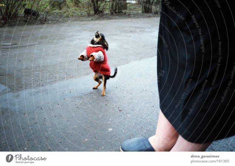Dog 2 Hand Red Colour Animal Love Street Emotions Fear Asphalt Passion Meal Mammal Estonia Tallinn
