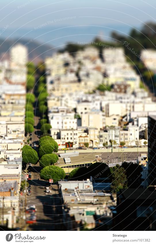 Tree City House (Residential Structure) Street Car Small Motor vehicle USA Vantage point Toys Americas Traffic infrastructure Quarter Reaction California