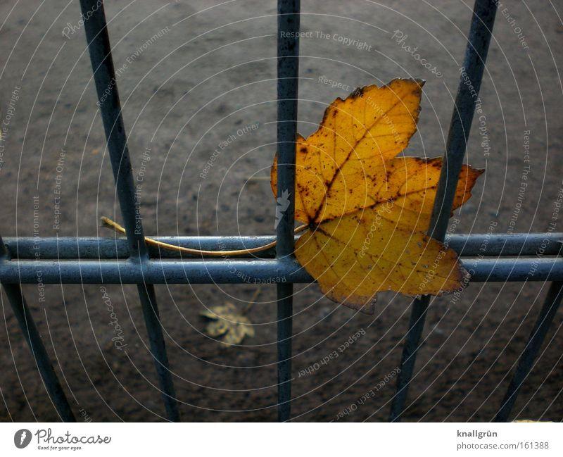 Leaf Autumn Sadness Metal Transience Seasons Fence Grating Golden brown