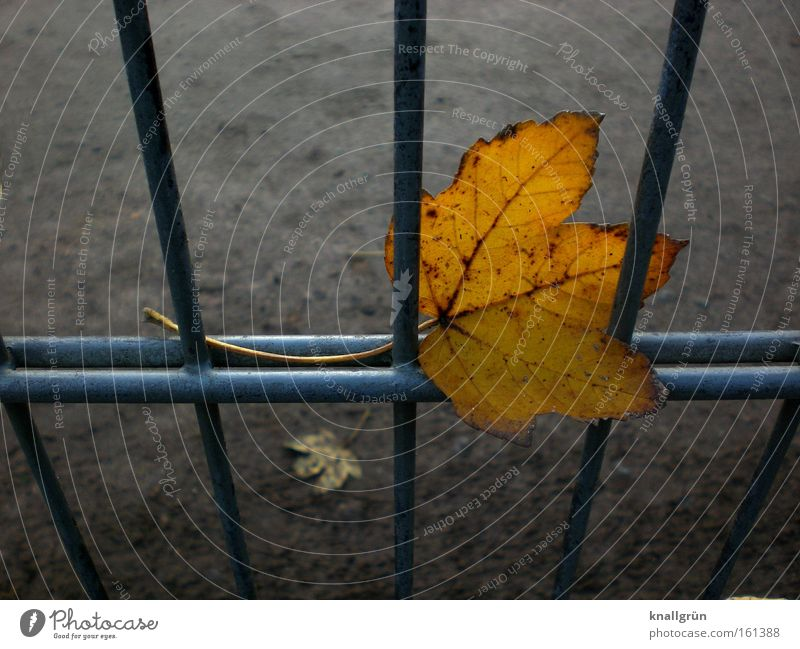 stuck Leaf Autumn Seasons Grating Fence Metal Transience Golden brown Sadness