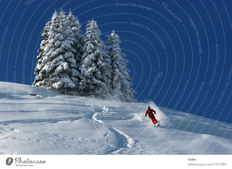 ski paradise Deep snow Powder snow Snowscape Virgin snow Ski resort Forest of Bregenz Tourism Federal State of Vorarlberg Ski tracks Sports Playing Winter