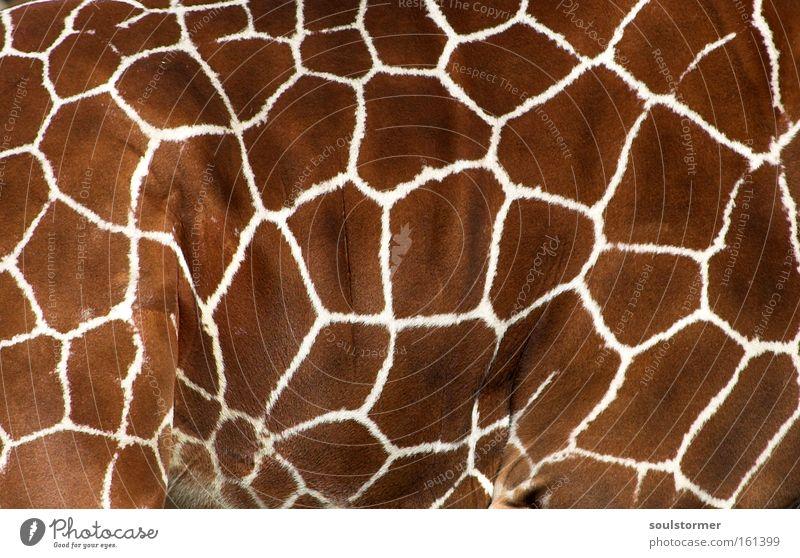 Sofa? Giraffe Wooden giraffe Pattern Neck Zoo Pelt Blanket Ceiling Animal Life Decoration Africa Bedroom Living room Mammal giraffe pattern