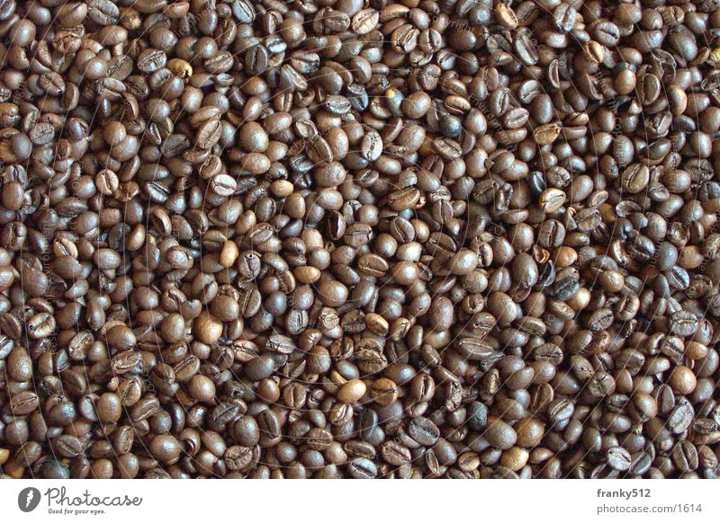 Lifestyle Coffee Espresso Vegetable Beans Legume Coffee bean
