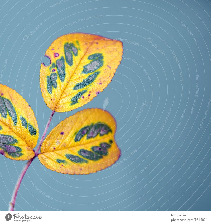 Nature Blue Tree Plant Colour Leaf Environment Yellow Autumn Art Park Exceptional Design Fresh Esthetic Transience
