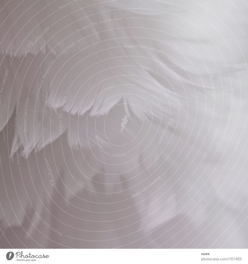 White Decoration Feather Soft Delicate Heavenly Material Smooth Easy Christmas decoration Innocent Fuzz Downy feather Abstract