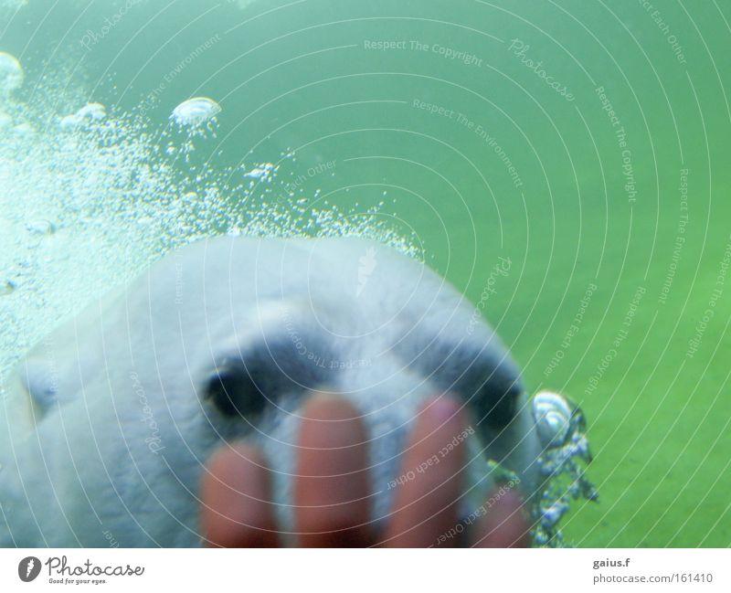 Water Joy Bear Zoo Curiosity Mammal Interest Polar Bear
