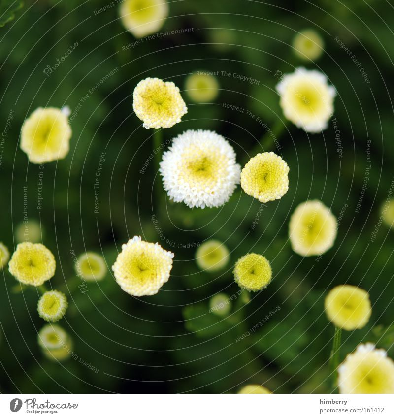 Nature Beautiful Flower Green Plant Summer Yellow Colour Meadow Style Spring Park Contentment Background picture Design Esthetic
