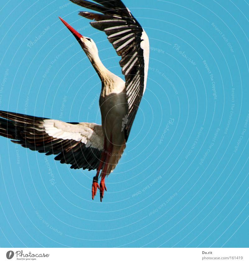 Joy Calm Far-off places Bird Dance Flying Birthday Large Free Trip Aviation Feather Peace Near Beak Blue sky