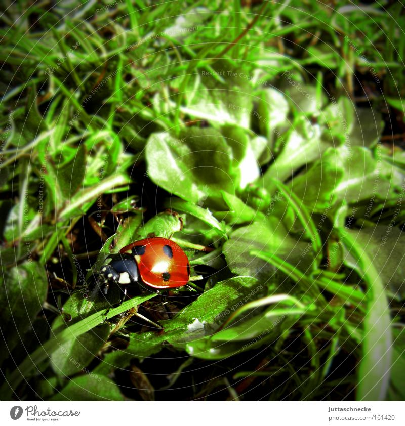 All the happiness in the world Ladybird Beetle Insect Happy Good luck charm Seven-spot ladybird Spring Crawl Meadow Nature Peace Juttas snail