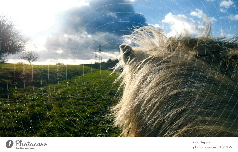 Clouds Far-off places Meadow Freedom Landscape Contentment Horse Mammal Dramatic Icelander