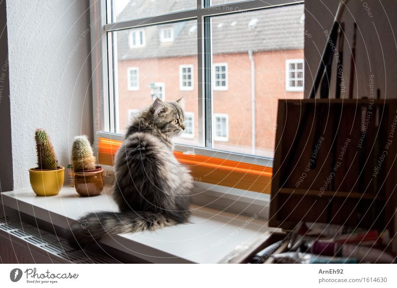 window seat Painting (action, artwork) Animal Pet Cat Animal face Pelt 1 Baby animal Paintbrush Observe Relaxation Sit Friendliness Small Natural Beautiful