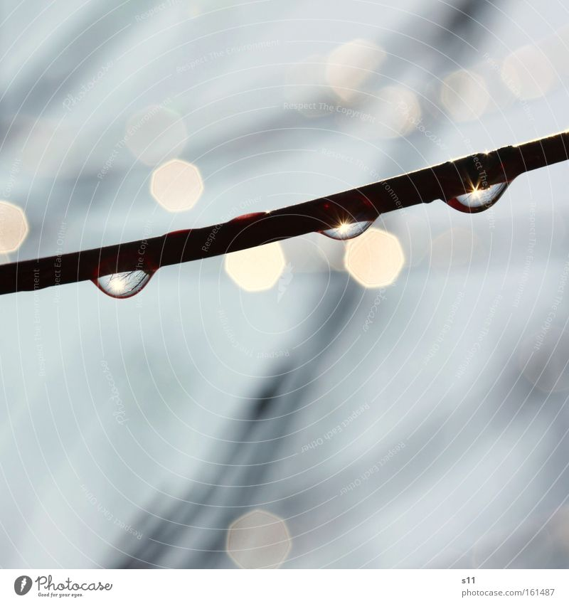 Nature Water Beautiful Sun Spring Rain Power Weather Wet Force Hope Branch Twig