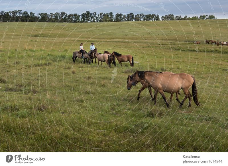 welcoming address Ride Human being Young woman Youth (Young adults) Young man 2 Landscape Plant Animal Horizon eucalyptus trees Meadow Field Horse