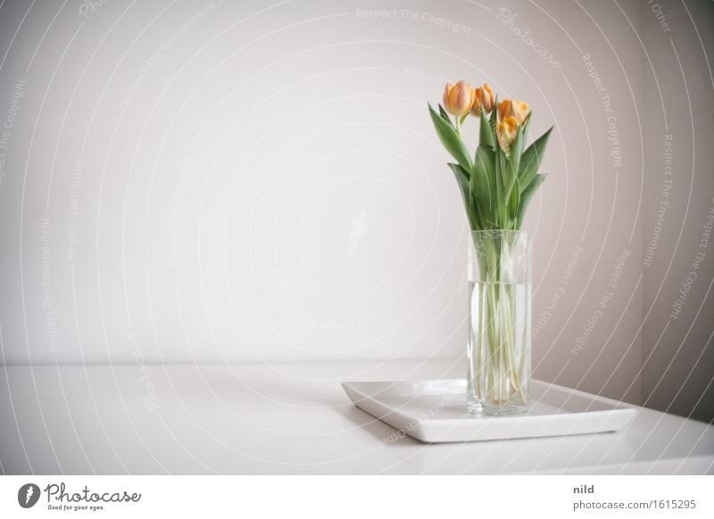 Tulips in the office Office work Workplace Spring Plant Beautiful Reduced Bouquet Blossom Vase Wall (building) Colour photo Interior shot Detail Copy Space left